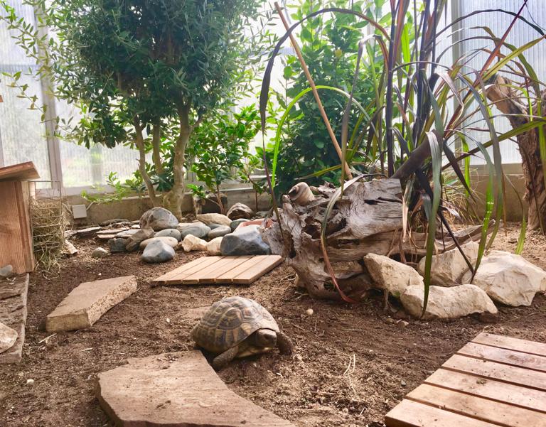 Schildkröten_Gewächshaus